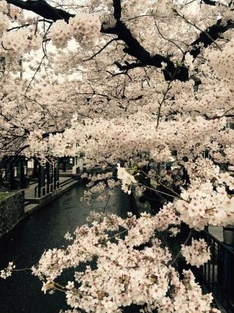 桜満開〜!_b0341759_09303246.jpg