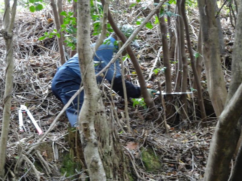 ササユリの道に手すりを取り付けました in うみべの森_c0108460_22062712.jpg