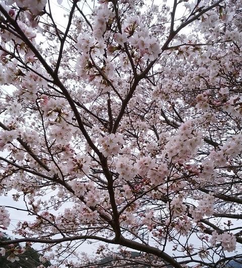 花盛り_d0209370_1449215.jpg