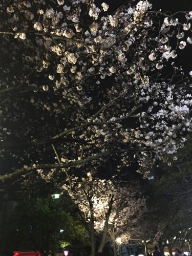 お花見_b0201285_11174106.jpg