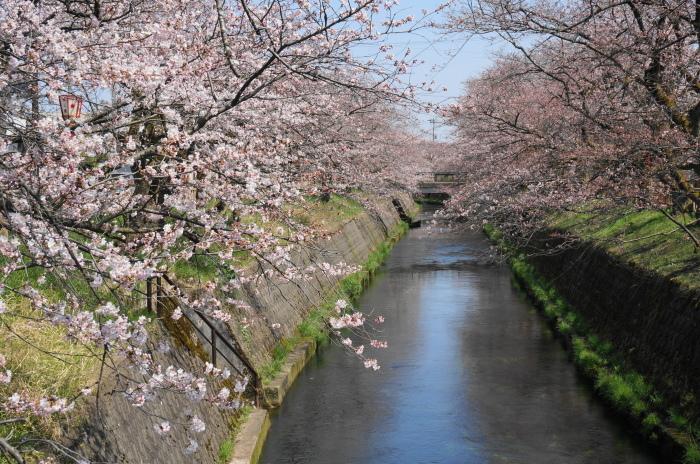 きょうの桜_d0047885_00414832.jpg