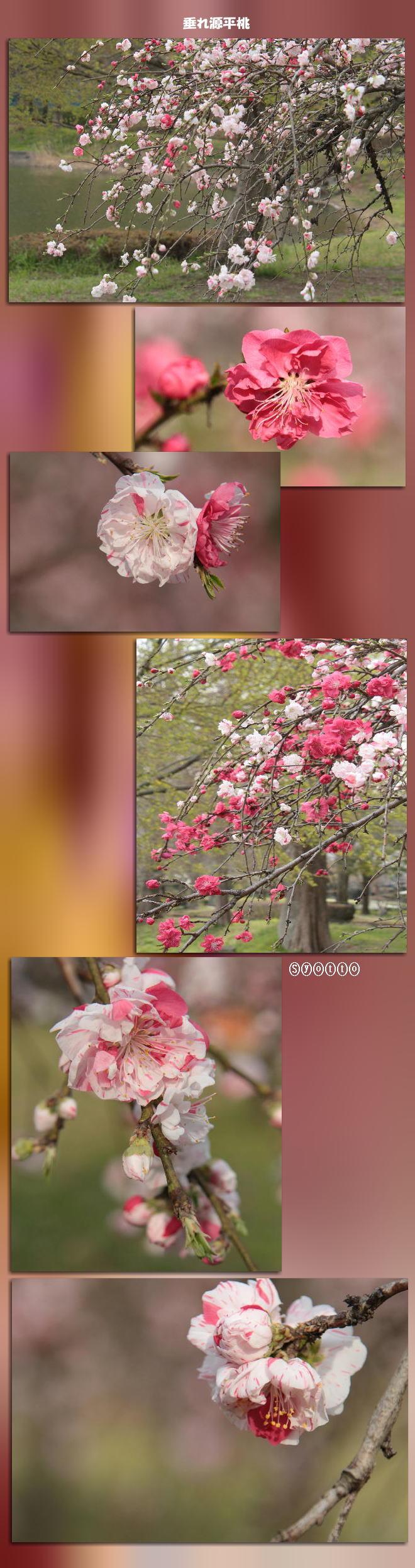 f0164592_10135680.jpg