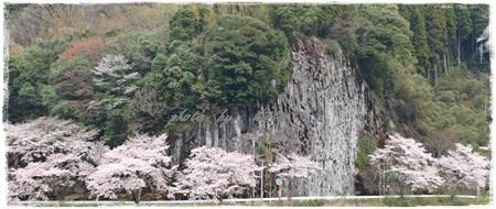 ~~   桜 満開 !  ~~_b0189699_00340581.jpg