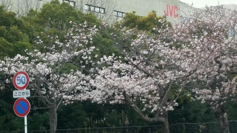 桜 さくら サクラ_d0092901_00081582.jpg