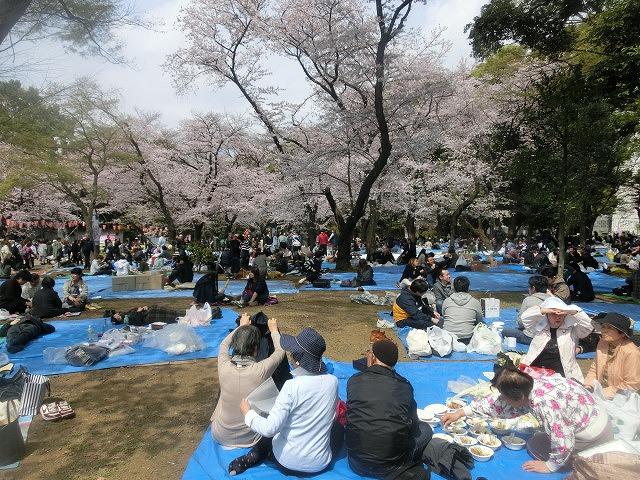 上野公園、北の丸公園、靖国神社  東京はどこも桜が満開なのに_f0141310_7585254.jpg