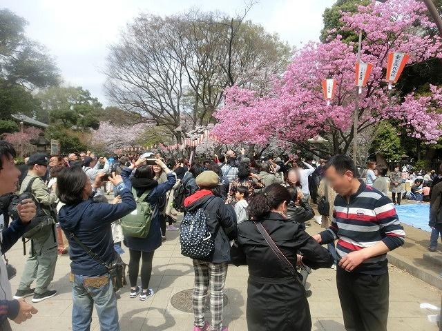 上野公園、北の丸公園、靖国神社  東京はどこも桜が満開なのに_f0141310_7591525.jpg