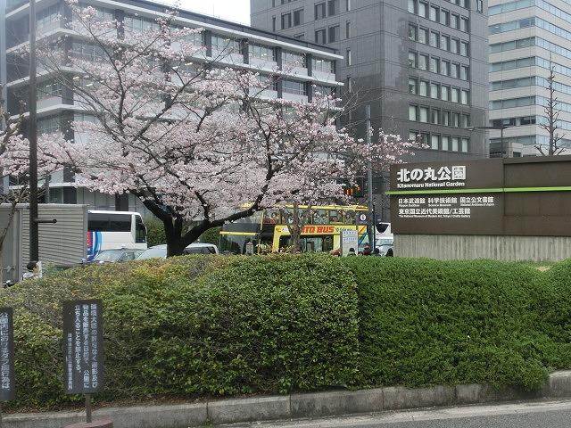 上野公園、北の丸公園、靖国神社  東京はどこも桜が満開なのに_f0141310_759455.jpg
