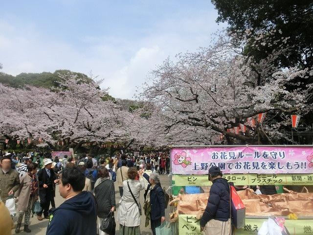 上野公園、北の丸公園、靖国神社  東京はどこも桜が満開なのに_f0141310_759739.jpg