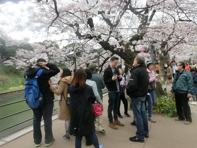 上野公園、北の丸公園、靖国神社  東京はどこも桜が満開なのに_f0141310_80186.jpg
