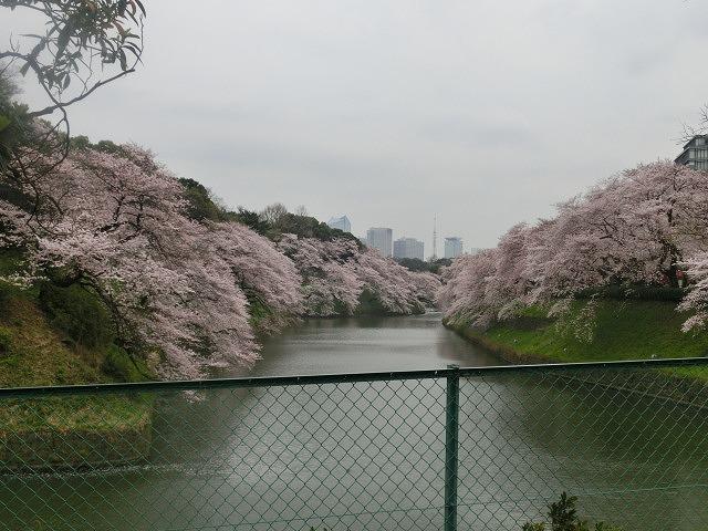 上野公園、北の丸公園、靖国神社  東京はどこも桜が満開なのに_f0141310_80634.jpg
