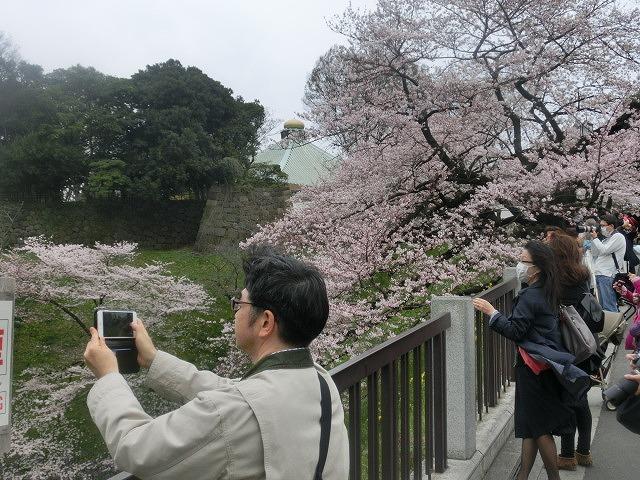 上野公園、北の丸公園、靖国神社  東京はどこも桜が満開なのに_f0141310_815635.jpg