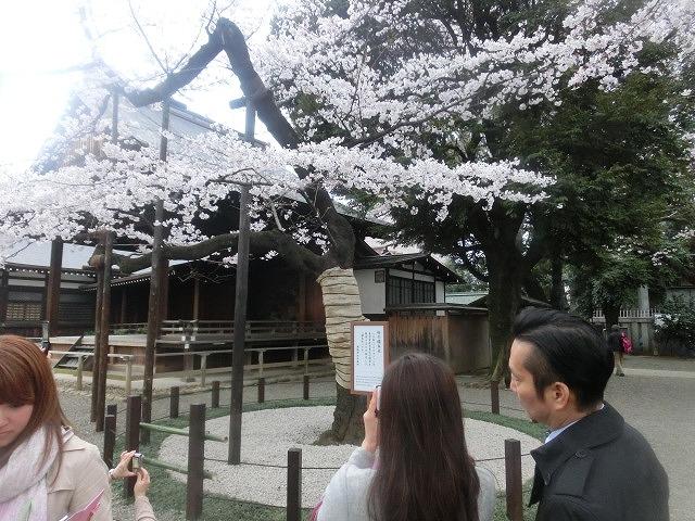 上野公園、北の丸公園、靖国神社  東京はどこも桜が満開なのに_f0141310_824679.jpg