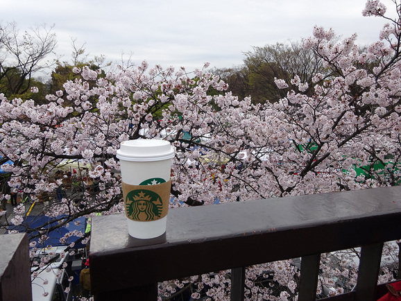 代々木公園でお花見_e0230011_17513671.jpg