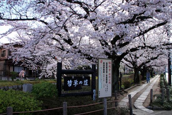 2016.桜だより29 哲学の道も満開_e0048413_19565478.jpg