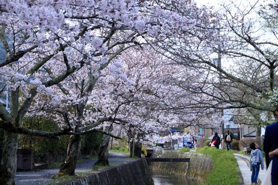 2016.桜だより29 哲学の道も満開_e0048413_1957137.jpg