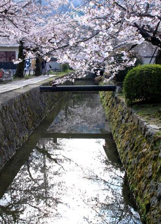 2016.桜だより29 哲学の道も満開_e0048413_19582822.jpg