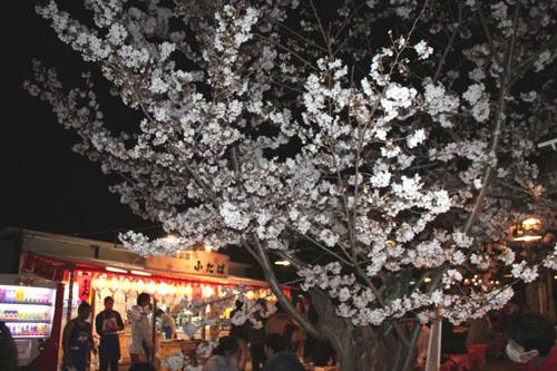 16桜だより31 円山公園の夜桜_e0048413_2210214.jpg