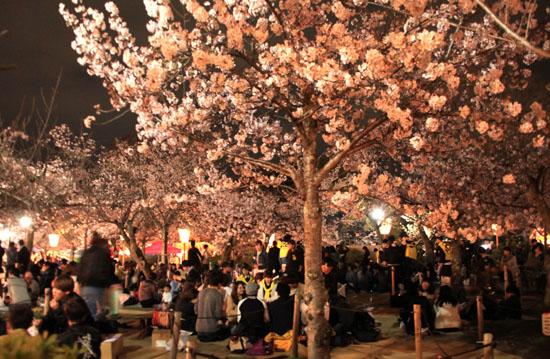 16桜だより31 円山公園の夜桜_e0048413_22103545.jpg