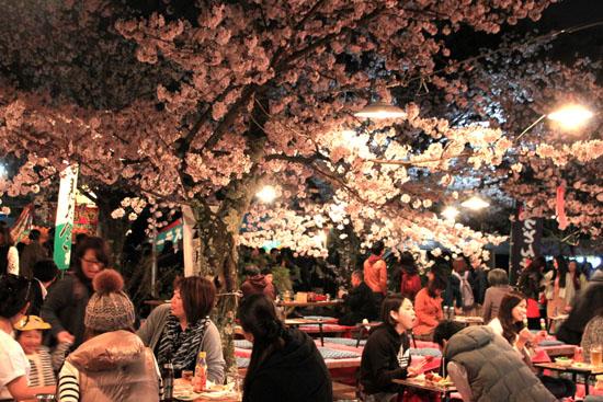 16桜だより31 円山公園の夜桜_e0048413_22104846.jpg
