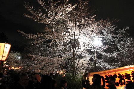 16桜だより31 円山公園の夜桜_e0048413_2210732.jpg