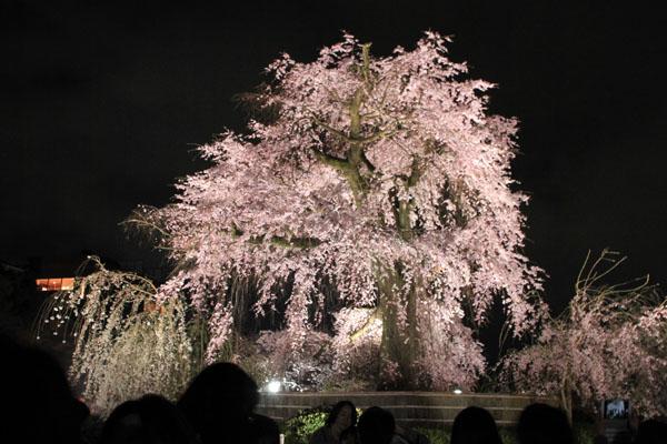 16桜だより31 円山公園の夜桜_e0048413_2294183.jpg