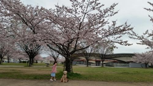 桜_e0136815_08215488.jpg