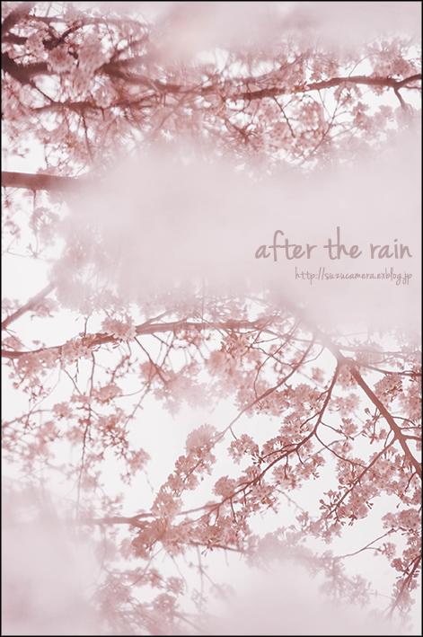 雨上がりの桜_f0100215_00450572.jpg