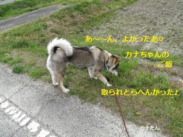 f0143123_10150154.jpg