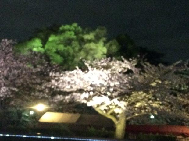 初めての夜桜クルージング。4月は桜・・・_c0215031_22095776.jpg
