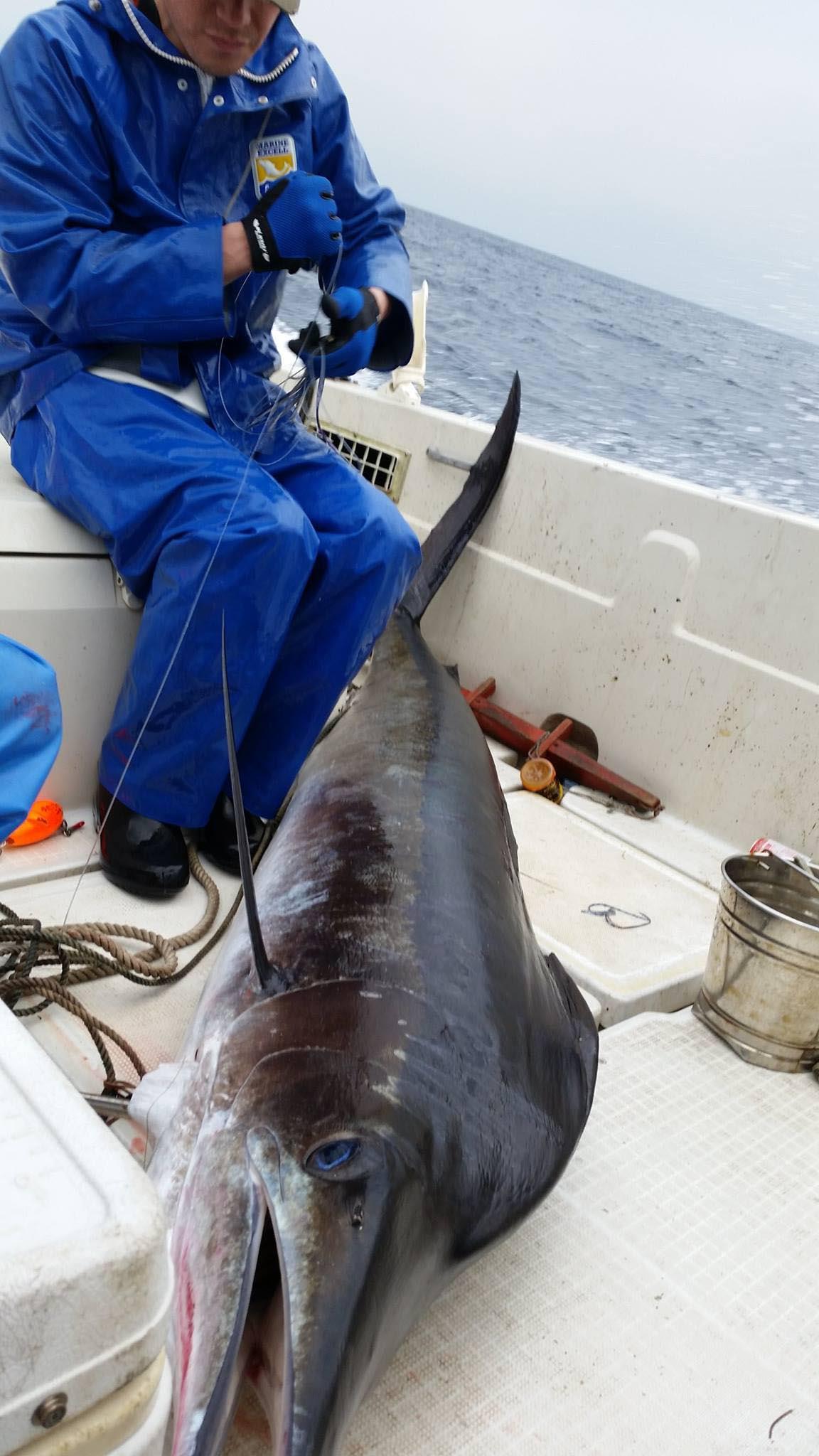 御蔵島の釣りロマンを求めて_f0009039_1121398.jpg