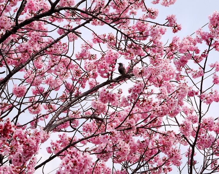 花のある風景_b0093754_22575060.jpg