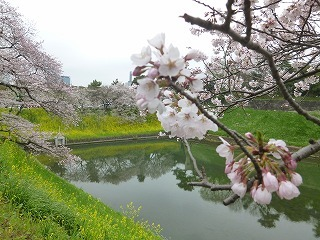OFFその1   風景として惹かれる桜 半蔵濠~千鳥が淵_a0165160_13103303.jpg