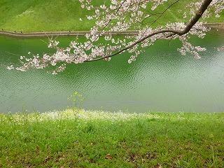 OFFその1   風景として惹かれる桜 半蔵濠~千鳥が淵_a0165160_13374768.jpg