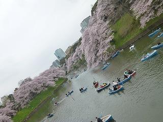OFFその1   風景として惹かれる桜 半蔵濠~千鳥が淵_a0165160_13443665.jpg