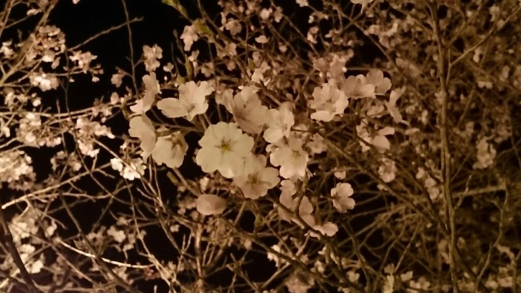 春らんまん_b0328361_21241718.jpg