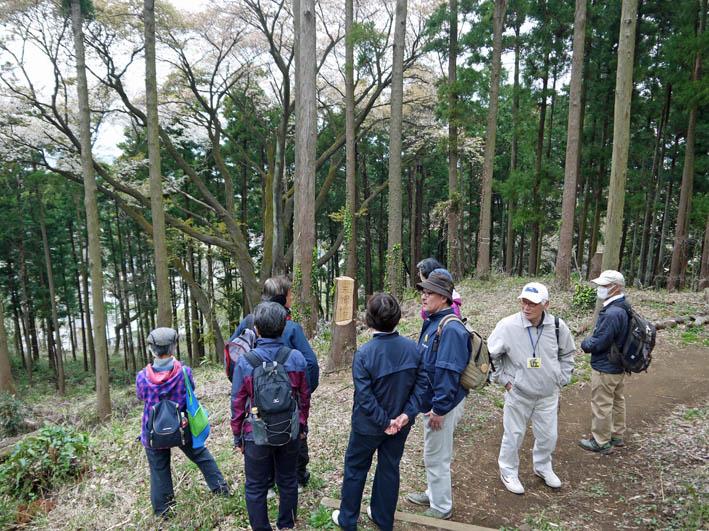 花冷えの中、六国見山のシンボルツリー『夫婦桜』探訪4・2_c0014967_1220979.jpg