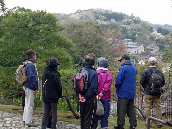 花冷えの中、六国見山のシンボルツリー『夫婦桜』探訪4・2_c0014967_12215310.jpg