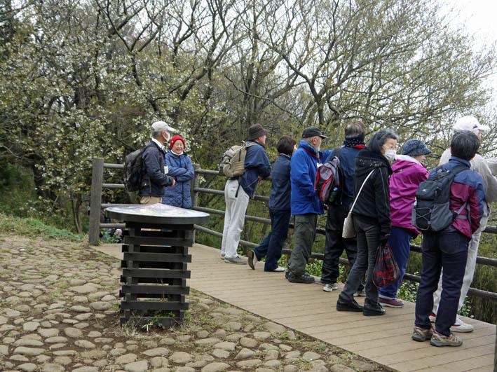 花冷えの中、六国見山のシンボルツリー『夫婦桜』探訪4・2_c0014967_12222834.jpg