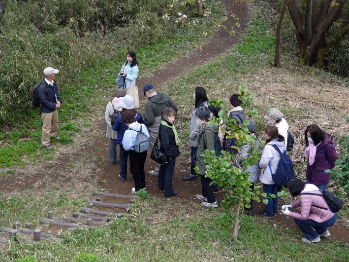 花冷えの中、六国見山のシンボルツリー『夫婦桜』探訪4・2_c0014967_12241685.jpg