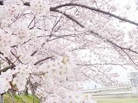 日曜日はお花見_f0114468_15485530.jpg