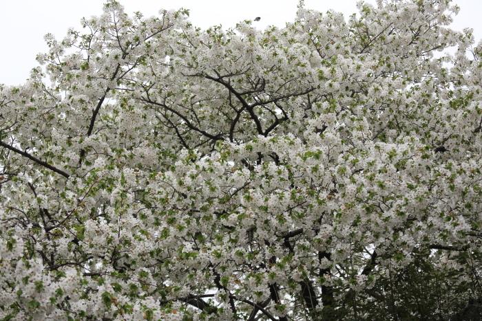 野川緑地公園_b0188569_1502482.jpg