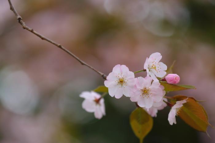 野川緑地公園_b0188569_1505558.jpg