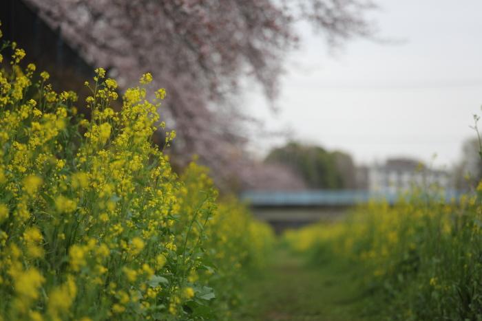 野川緑地公園_b0188569_1512626.jpg