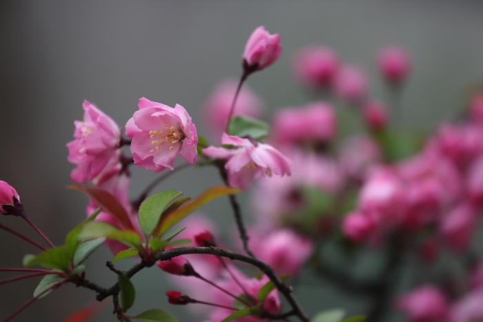 野川緑地公園_b0188569_1513141.jpg