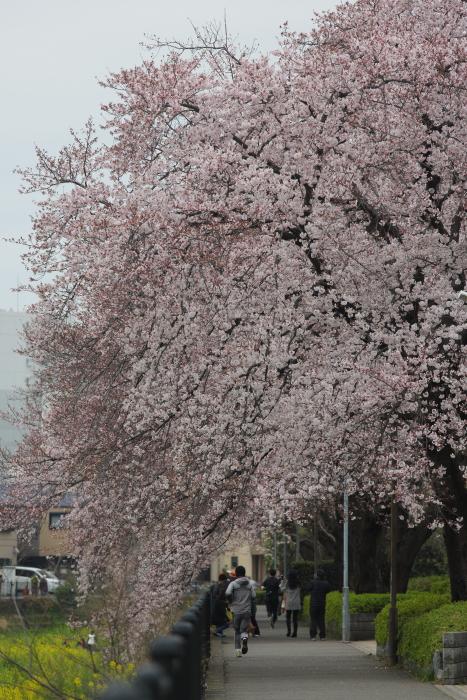 野川緑地公園_b0188569_1514051.jpg
