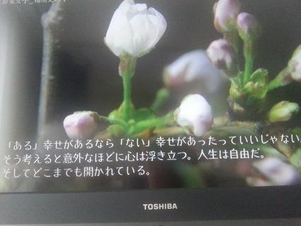 d0048577_15451897.jpg