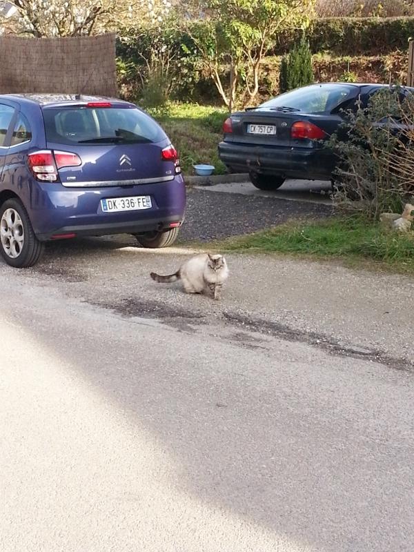 フランスの猫ちゃん~♪_c0122889_20544723.jpg