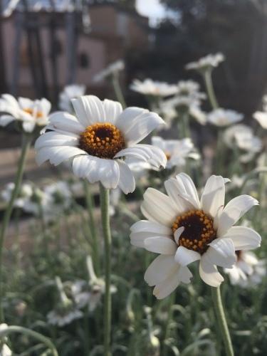 お庭造りのプロを訪問_a0134394_17301940.jpeg