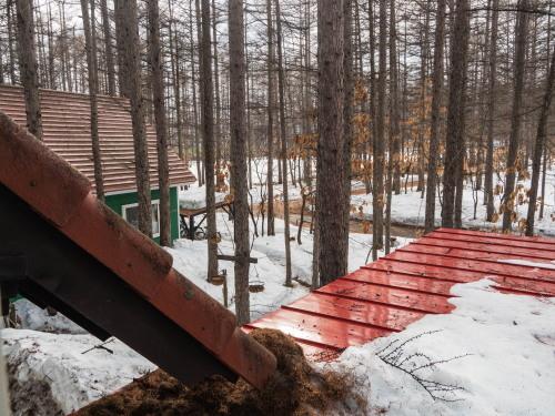 穏やかな新年度の始まり・・エゾフクロウになった気分で森の風景を!_f0276498_08350550.jpg