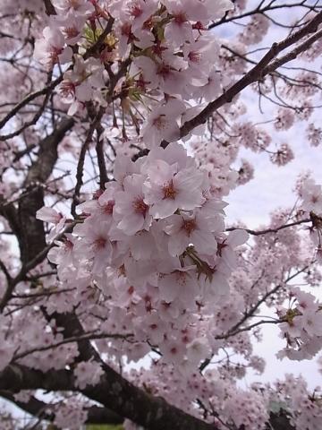 お昼にちょっとお花見_b0186200_16441728.jpg
